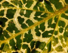 Free Milkweed Royalty Free Stock Image - 4697056