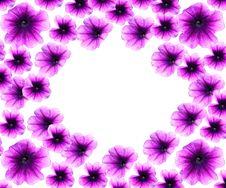 Free Spring Border Petunias Royalty Free Stock Photography - 4699157