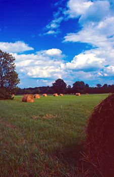 Free Round Bales In A Line Stock Photo - 4699210