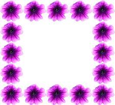 Free Spring Border Petunias Royalty Free Stock Photography - 4699307