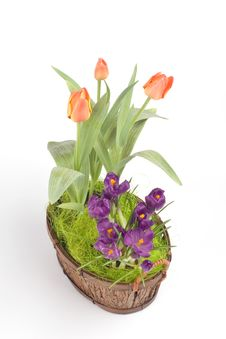 Free Violet Crocuses And Orange Tulips Royalty Free Stock Images - 4699959