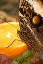 Free Owl Butterfly On An Orange Stock Image - 475551