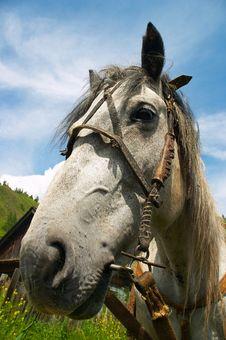Free Horse Portrait-02 Stock Image - 470761