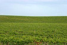 Free Vineyard 5 Royalty Free Stock Photography - 471167