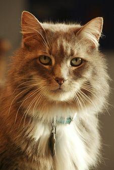 Free Kitty Royalty Free Stock Photos - 471628