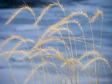Free Tall Grass Pattern Royalty Free Stock Image - 471756