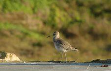 Free Bird Walking Royalty Free Stock Photos - 472228