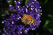 Free Butterfly Landing Royalty Free Stock Photos - 473108