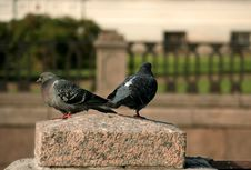 Free Two Doves On The Granite Stone Stock Image - 475211