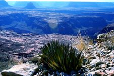 Free Blue Agave Growing On Rim Of Grand Canyon Royalty Free Stock Photography - 476437