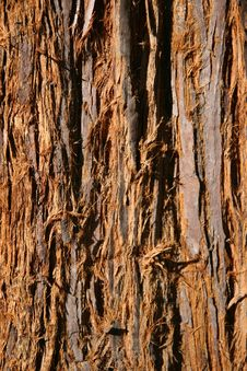 Free Fuzzy Brown Tree Bark Royalty Free Stock Image - 477046