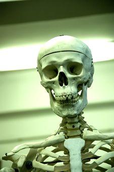Free Bonehead Stock Images - 479234