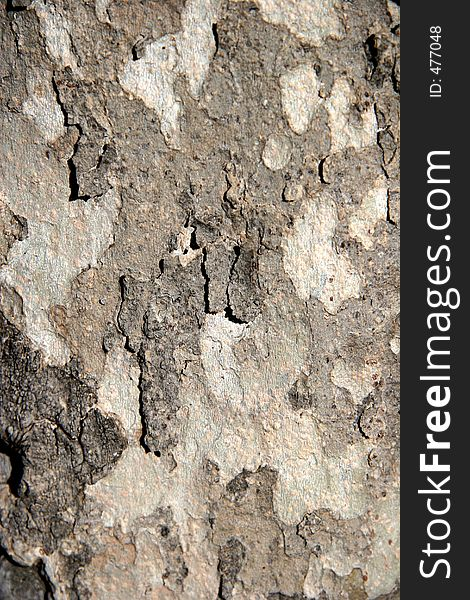 Multi Colored Smooth Tree Bark Free Stock Images Photos
