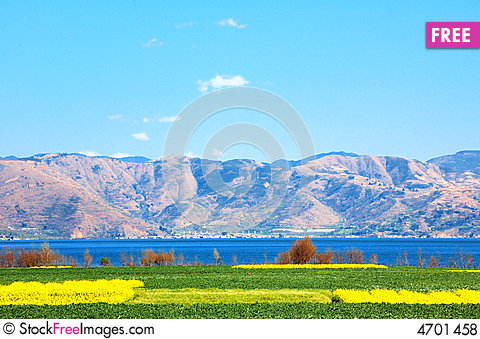 Free The Rape Is Spent On Erhai Lake Lakeside Royalty Free Stock Photos - 4701458