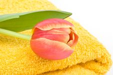 Free Yellow Towel And Tulip Royalty Free Stock Images - 4700089