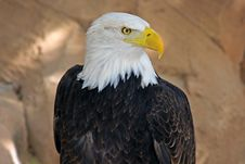 Free White-haired Sea-eagle Stock Photos - 4700343