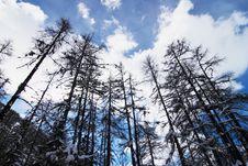 Free Val Ferret Trip Stock Photo - 4700360