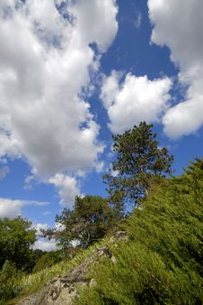 Free Trees And Clouds Stock Photo - 4701990