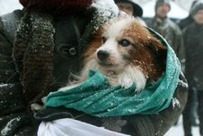 Free Dog Freezes Royalty Free Stock Images - 4704589