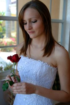 Free Bride With Rose Stock Photography - 4705692