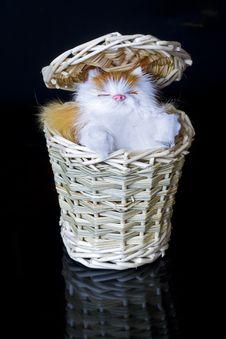 Free Kitten Royalty Free Stock Photos - 4708518