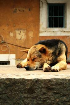 Free Dog Royalty Free Stock Photography - 4709127