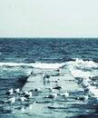 Free Gulls Sitting Near Sea Stock Photos - 4715053