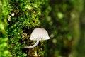 Free Mushroom In Moss Royalty Free Stock Image - 4716616