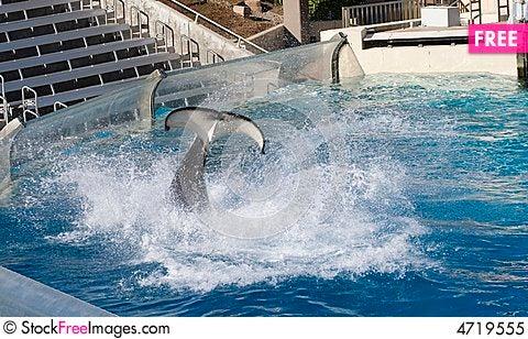 Free Big Water Splah By Killer Whal Royalty Free Stock Photo - 4719555