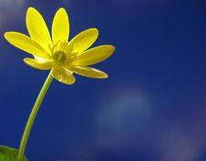 Free Yellow Flower On Blue Background Stock Photos - 4710643