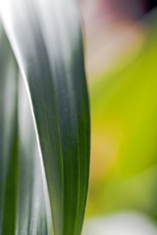 Free Orchid Leaves Stock Photo - 4711320