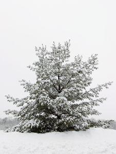 Free Winter Storm Stock Image - 4711891