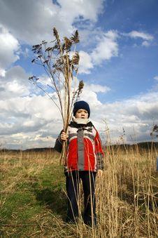 Free Boy On Meadow Royalty Free Stock Photo - 4712045