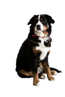 Free A Dog Sitting Up Stock Photos - 4712303