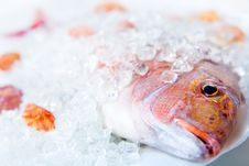 Free Head Dorado In Ice Royalty Free Stock Photography - 4713177