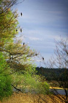 Free Birds On A Tree Stock Photo - 4713460