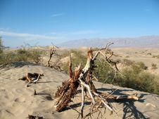 Free Sand Dunes, Death Valley, California Stock Photo - 4714000