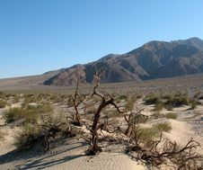 Free Sand Dunes, Death Valley, California Royalty Free Stock Photography - 4714007