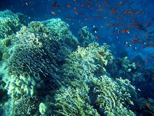 Free The Reef Stock Photography - 4714102