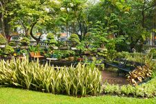 Free Lush Bangkok Park Stock Photos - 4714133