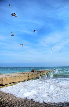 Free Flying Gulls Over The Sea Stock Images - 4715104
