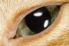 Free Cat S Eye Close-Up Macro Royalty Free Stock Photo - 4715275