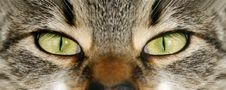 Free Eye Cat Royalty Free Stock Image - 4715276