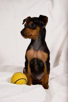 Free Speedy My Cute Puppy Royalty Free Stock Photo - 4715365