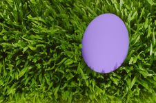Free A Detailed Close Up Of A Purpl Egg, Green Grass Royalty Free Stock Photos - 4715878