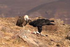 Free Black Eagle Royalty Free Stock Image - 4715946
