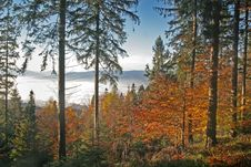 Free Colorful Forest And Mist Stock Images - 4716244