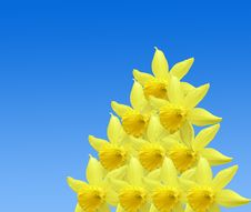 Free Repetitive Daffodil Pattern Stock Photos - 4719563
