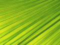 Free Green Leave Texture Royalty Free Stock Images - 4720169