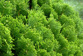 Free Green Leave Texture Stock Image - 4722901